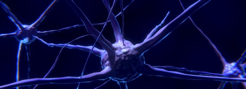 איך לתכנת את המוח שלך מחדש באימוני כושר